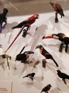 Birds- Natural HIstory Museum London