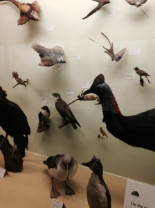 Birds - natural history museum, London