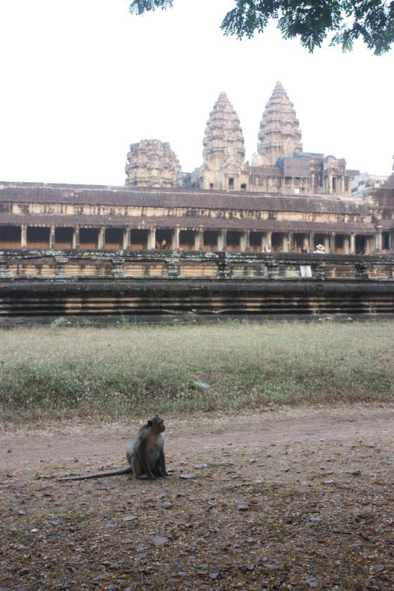 Monkey Angkor Wat