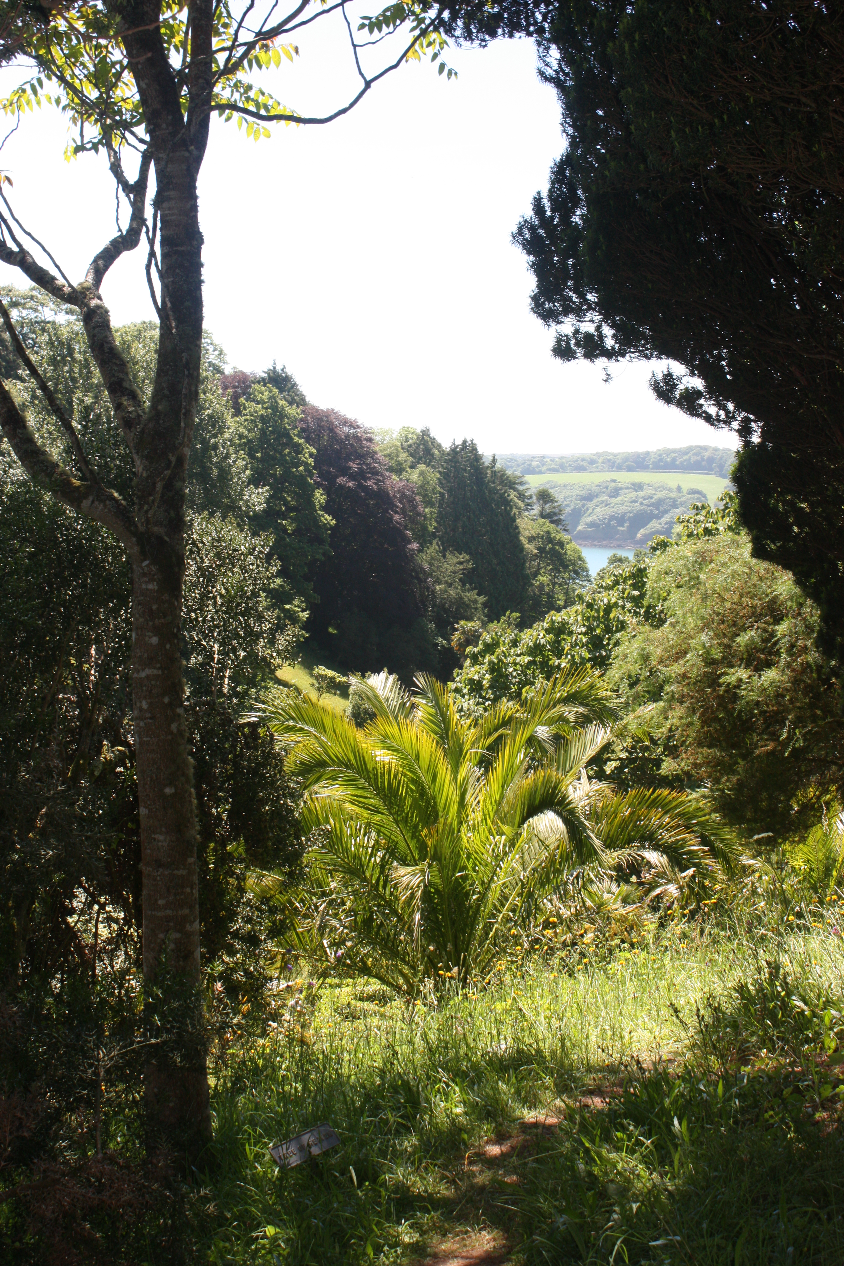 Glendurgan gardens Cornwall